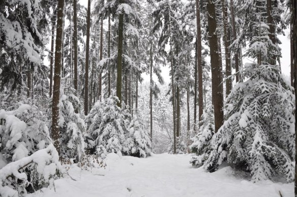 winter_background_1_by_kuoma_stock-d5nvzlr